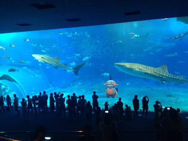 美ら海水族館に寄贈されたヌマクロー pic.twitter.com/ZuigYJlsn3