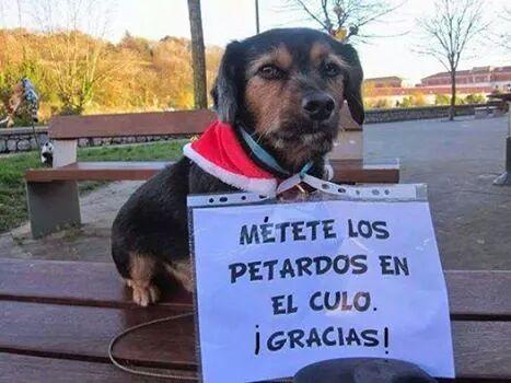 Te gusta la pirotecnia? Enjoy! #ProhibanLaPirotecnia Cc @borgesgra @valeriaschapira @nikitaneumann @dmigliaro http://t.co/XBxTON3rUR