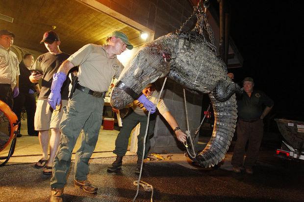 RT @Protect_Wldlife: Please Sign & RT: Shut Down Cruel Alligator Skin Tannery http://t.co/rPsqt6OwIz http://t.co/Uk3cbMi437