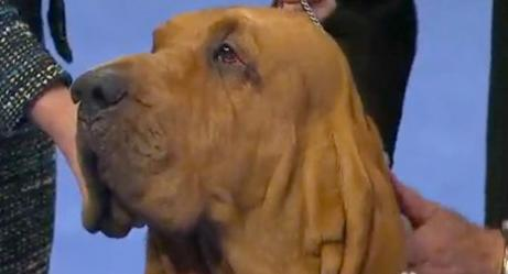A Bloodhound Named Nathan Video nathan th...