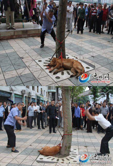 日本人に見立てた秋田犬を公衆の面前で【尖閣諸島は我が領土】といいながらな殴り殺し喜ぶ支那人たち。友好なんてありえない http://t.co/UL67zo4oyB
