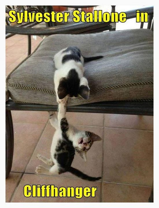 Cats recreate classic action movies... http://t.co/XeZBMnYA2k