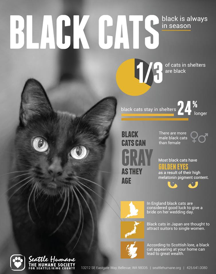 MT @Animalists: Happy #BlackFriday! Don't forget about all the black cats you're thankful for. http://t.co/DDm8L6umeq