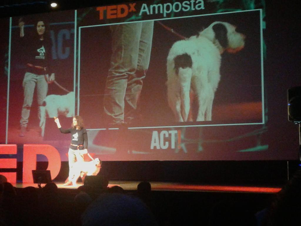 Engrescades Projecte innovador de col-laboració: Cases d'acollida i adopció internacional de gossos #TEDxAmp http://t.co/WpIi8AaZqF