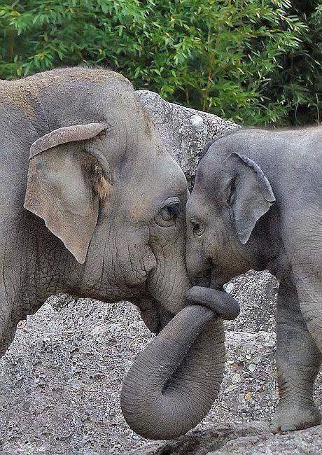 schattige dierenplaatjes olifant met haar kalf
