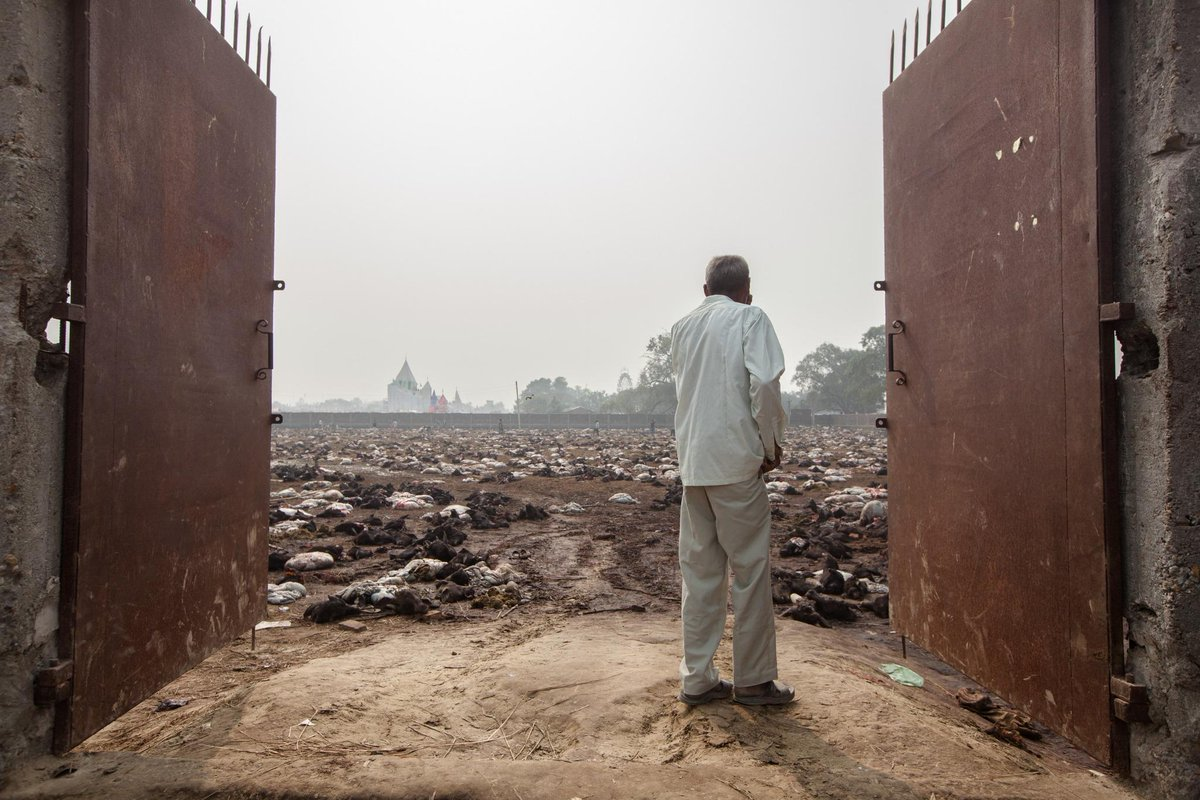 .@ciwf investigators are met with a scene of devastation today #Gadhimai #NeverAgain http://t.co/KbgxbRdoEu http://t.co/H2nSEcj0e0