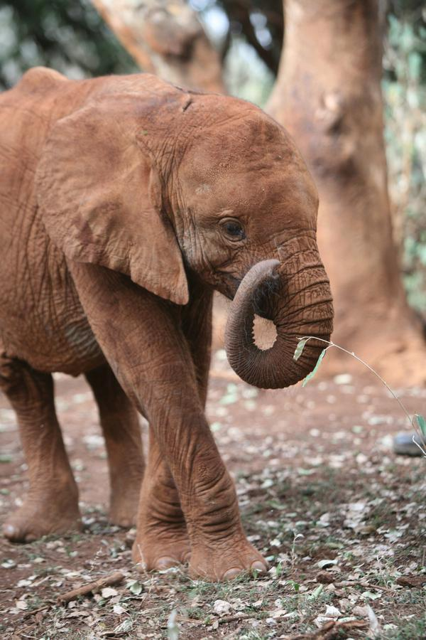 #SaveAfricanAnimals – back off #China – you have no right to pillage #Africa !  Get out! http://t.co/fdAFjHvBEL