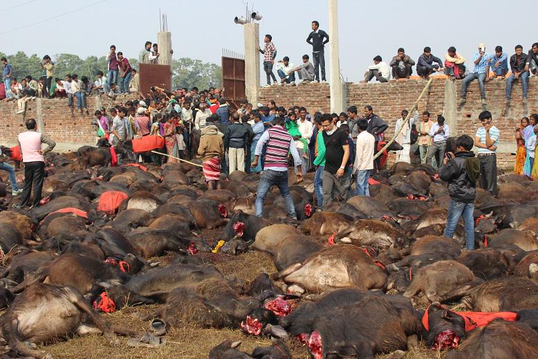 I never ever want to stand in the middle of a slaughter field like this again. Ban #GadhimaiFestival !!! http://t.co/h3Yjvu8mvP
