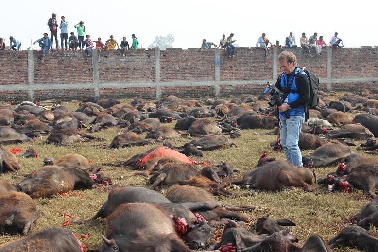 My friend @naturesound bearing witness - #gadhimai #gadhimaifestival @animalcruelty #animalsacrifice http://t.co/kIke7CUCv7