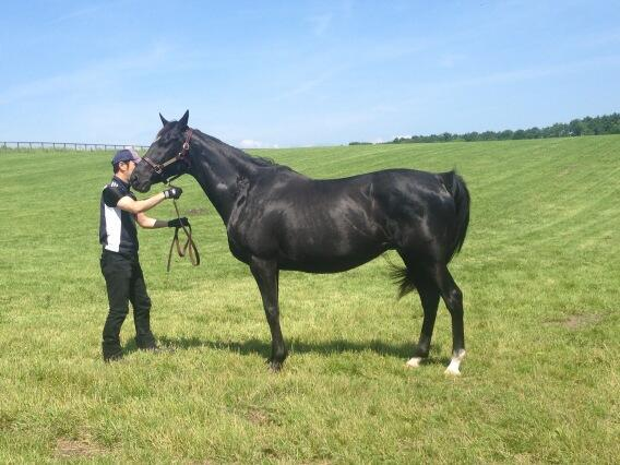 Japan Cup winner Epiphanea is out of Champion 3yo f & American Oaks winner Cesario (Special Week ex Kirov Premiere) http://t.co/q75DH72fEh