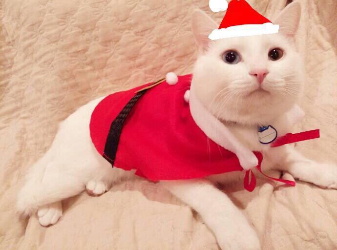 明日からもう12月クリスマス気分だにゃあ pic.twitter.com/eL91N1nRV7