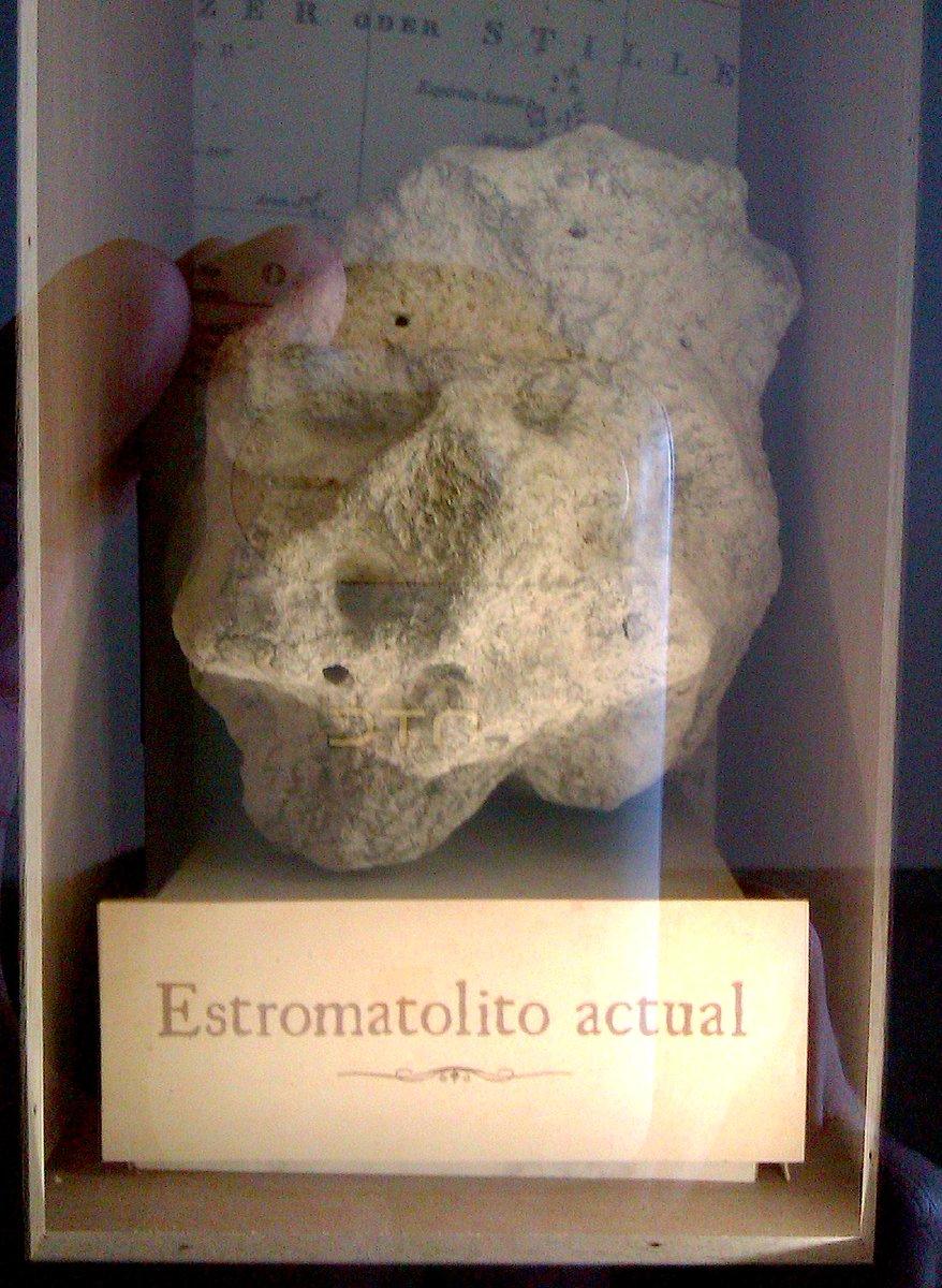 Estromatolito actual, otros fosilizados con +/- 3500 millones de años de antigüedad #microMOOC http://t.co/lx7h1FEeiD