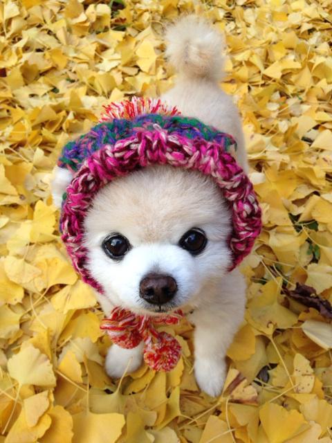 #wanko ニット帽の季節がやって参りました(˃̵ᴗ˂̵) pic.twitter.com/rLQMdzpQMw