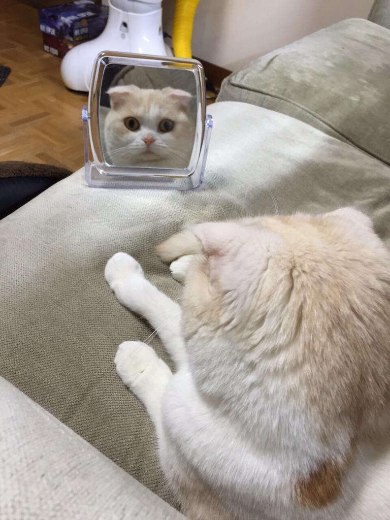 うわっ!鏡を駆使して飼い主を見るのやめてください!怖いじゃんか! pic.twitter.com/SGPru8S3Ye