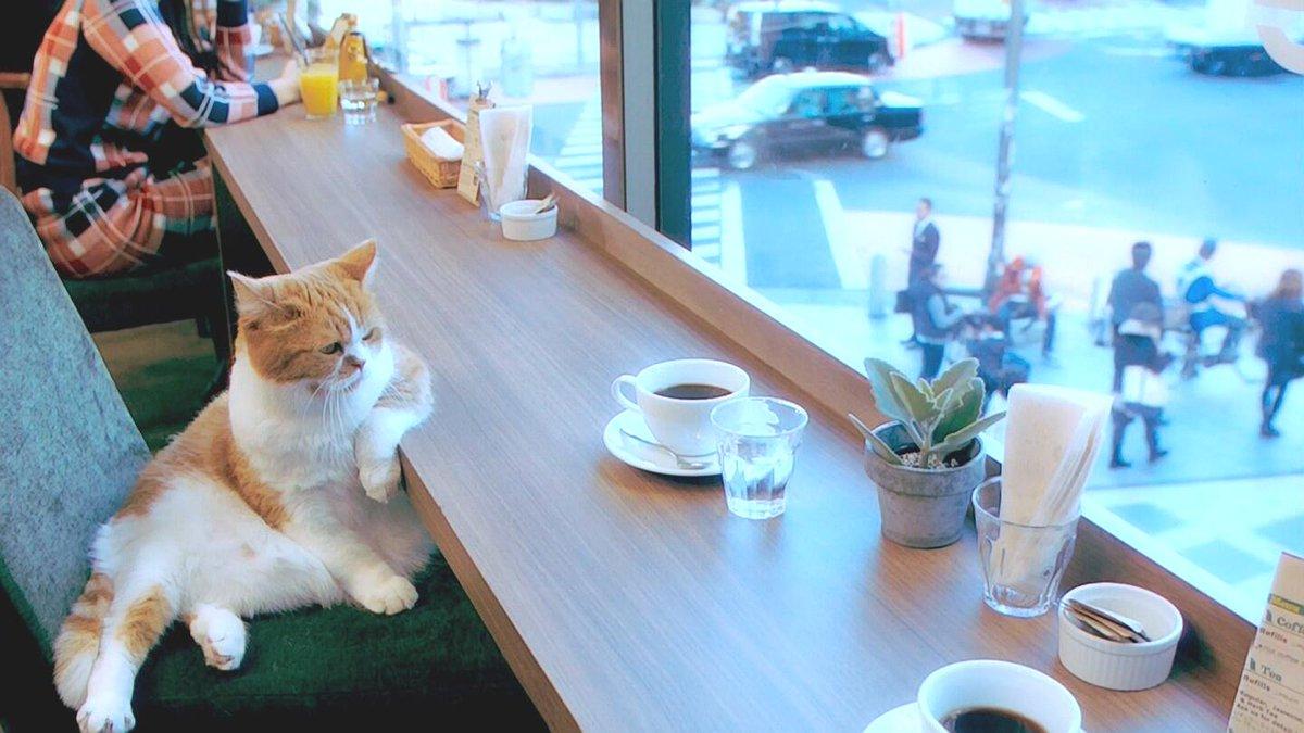 猫カフェってこんな感じだっけ??? pic.twitter.com/XVvnj3VFrJ