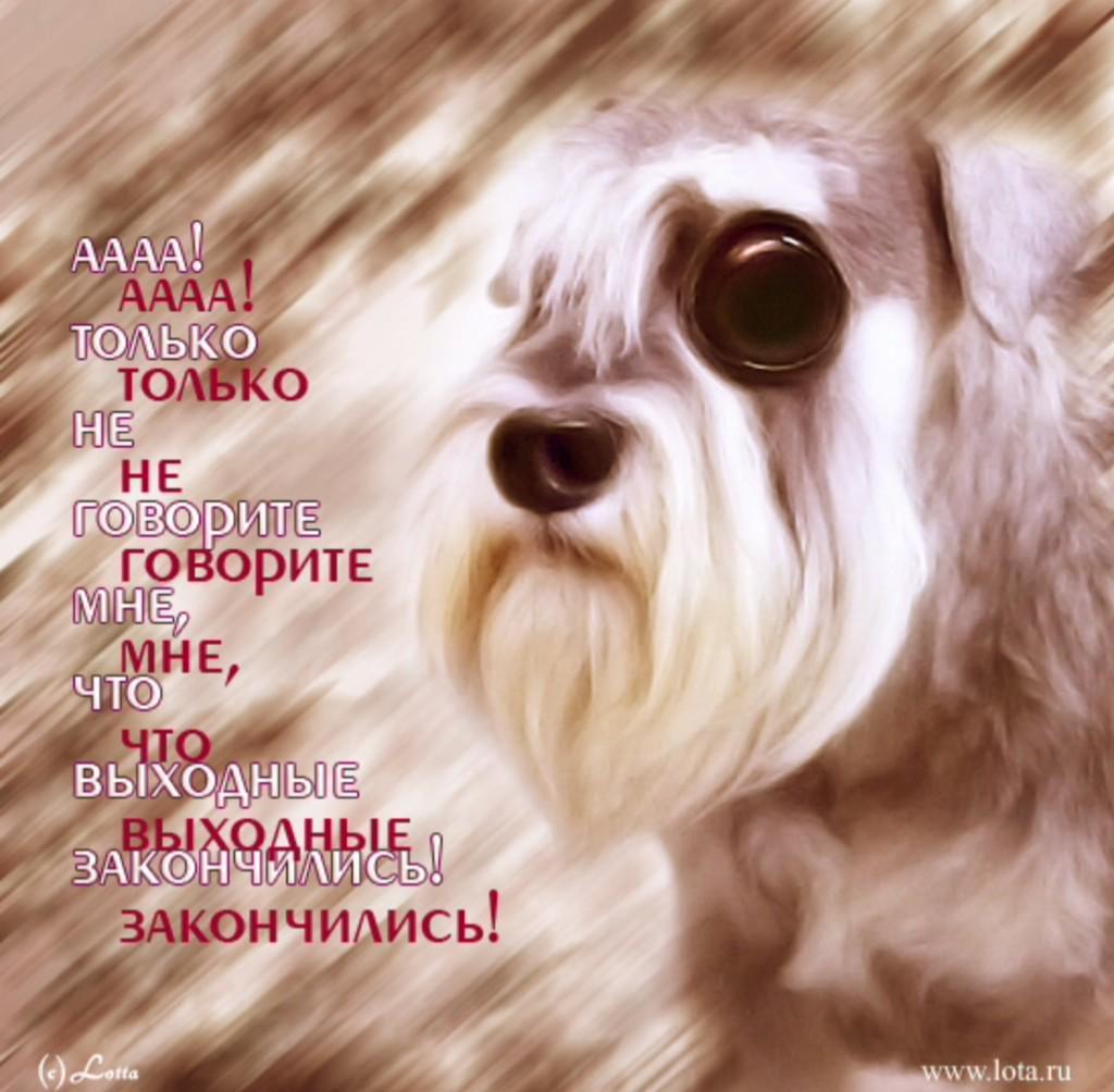 Картинка собака по дням недели