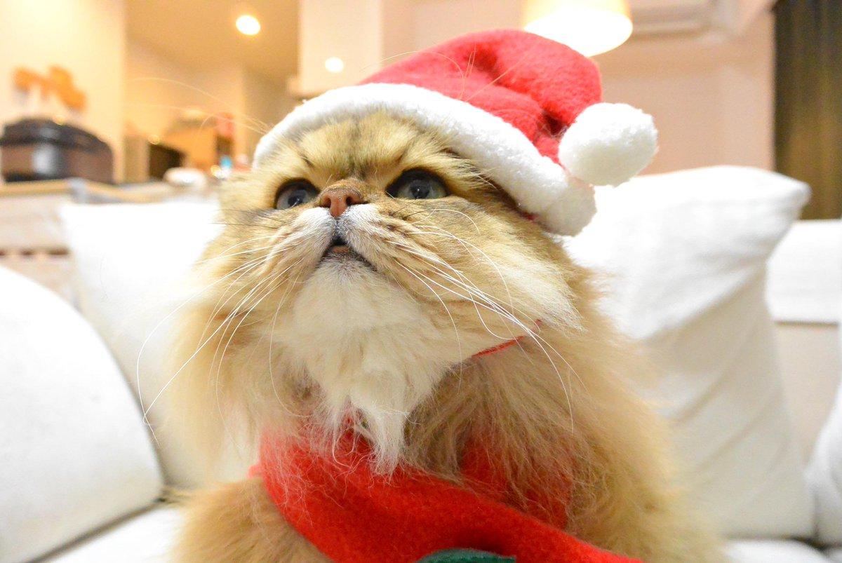 ちょっと早いけどメリークリスマス!白ひげサンタがやってきました。@婿 pic.twitter.com/0HiioTqTgA