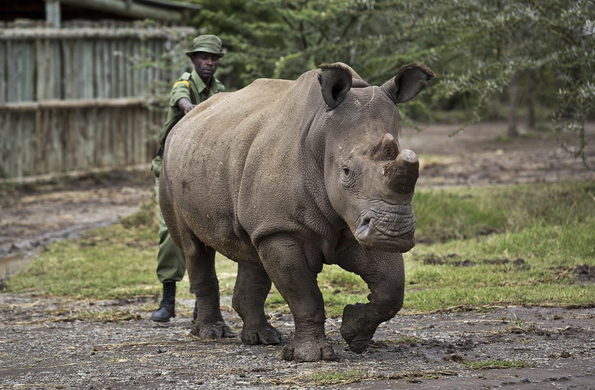 RT @washingtonpost: There are now only 5 northern white rhinos left in the entire world. http://t.co/oS35QlERbL http://t.co/e7lglPDBgO
