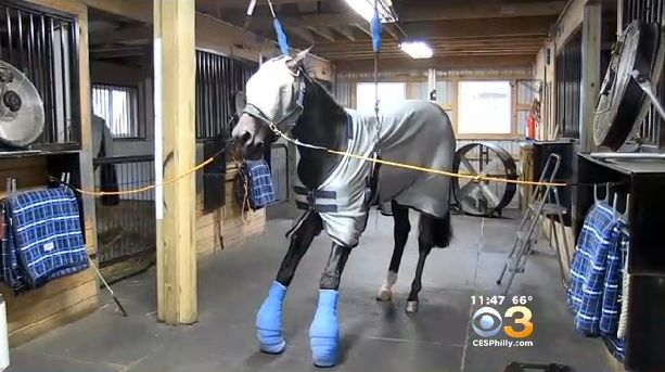 SOS-Tell @NewJerseySPCA>Arrest #Thors for #animalcruelty-cut #horses hooves OFF-etc-Pets died! http://t.co/J5X3xRYH3H http://t.co/X3l2y3VzVZ