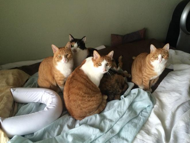 아침부터 어디 갔다와? 뭐 이런 표정들. http://t.co/dG89BfXz0o