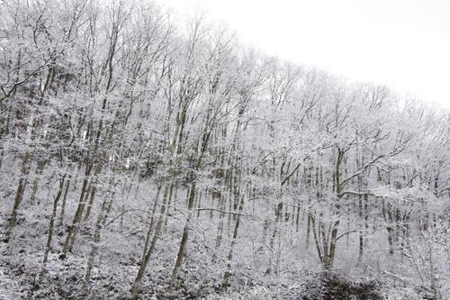 飛騨の森は朝から雪。真っ白な化粧をしています。 この森は、実は先日お亡くなりになられた菅原文太さんが手入れをされていた山でした。  文太さんの優しくて穏やかな人柄がこの森から伝わってくるようです。  心からご冥福をお祈り申し上げます。 http://t.co/JUATSdAk0D