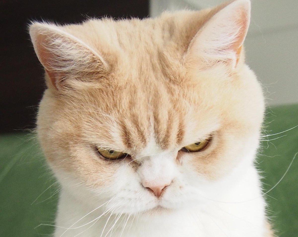 画像 : ふてぶてしい猫が集まった♪ブサイクねこもやっぱり ...