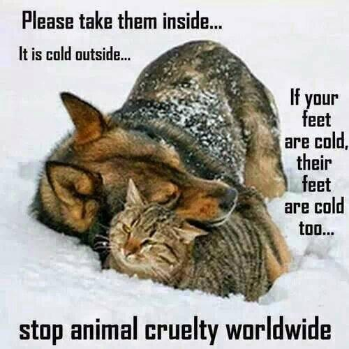 Sad this has to be said.  Have a ❤️ let animals come inside. RT http://t.co/xBdFF671Bd