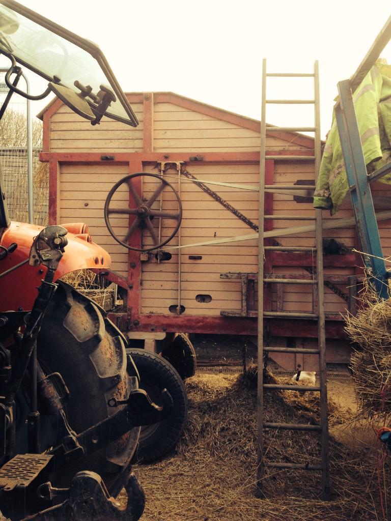 Gwaith caled yn dyrnu ar gyfer tô #BrynEryr heddiw! / Hard work threshing for #BrynEryr roof today! http://t.co/HGmu0VU2l6