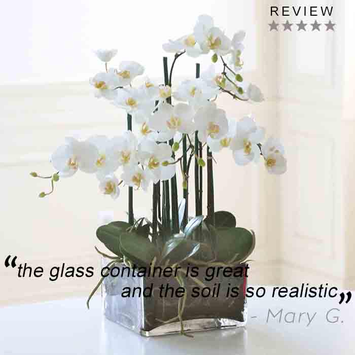 Thank you Mary for the 5-star rating on our Phalaenopsis in Square Glass! http://t.co/q9sSTZiPFE http://t.co/YokYrWSXOa