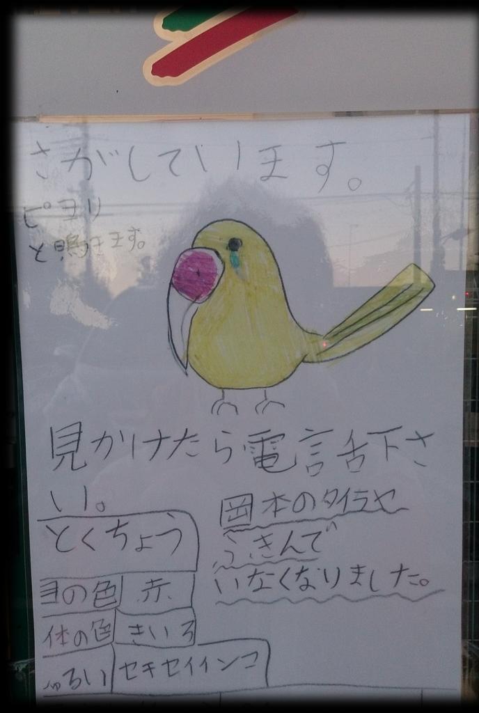 たいらや岡本店 〒329-1104 栃木県宇都宮市下岡本町 だと思われますRT @take2043: 見つかってほしい #鳥 #インコ http://t.co/hk9blLOyMn