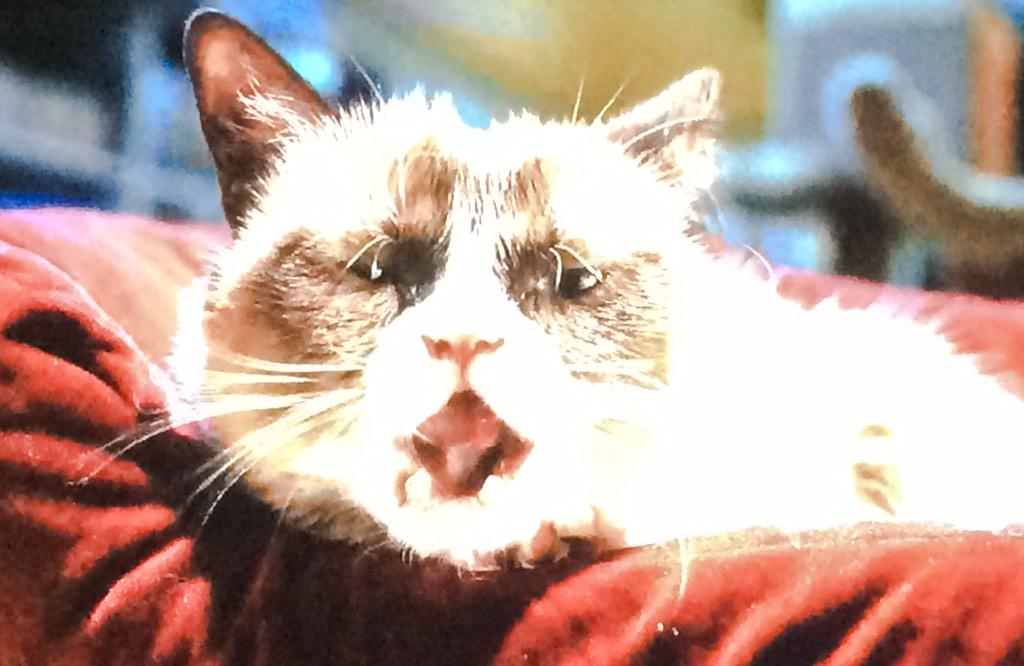 Look at the face, @RealGrumpyCat ❤️ http://t.co/r2Nyap5pEd