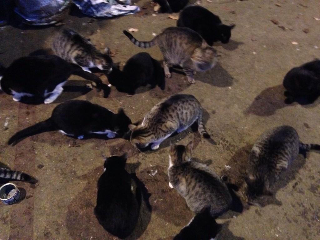 #緊急 #拡散 #兵庫県 #里親 #一時預かり #猫 21匹 RT @yuri_812218: 飼い主が病気になり、飼えないけど本人の意向で保健所に行きストップしてる、引き取りてなかったら処分、1匹でも引き取ってくださる方いませんか?http://t.co/bSiIVZmgX3