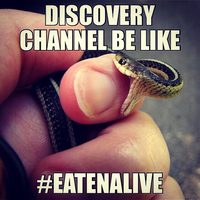 In case you missed Discovery Channel #EatenAlive here is the graphic pic of when he was eaten. http://t.co/VqoFLRP7nd