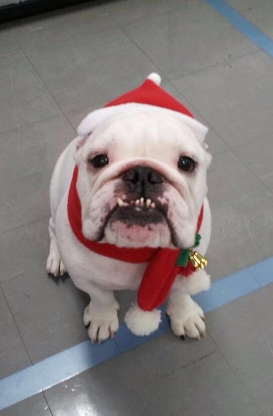 マモル、クリスマスバージョン!!!📺#きょうは会社休みます。 pic.twitter.com/BY3CgUiBYu