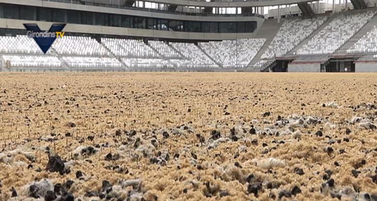Des nouvelles du chantier du Nouveau Stade