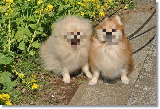 モザイクかけれるアプリを入れたので犬画像に片っ端からモザイクかけてる http://t.co/hQTwWx0ZpU