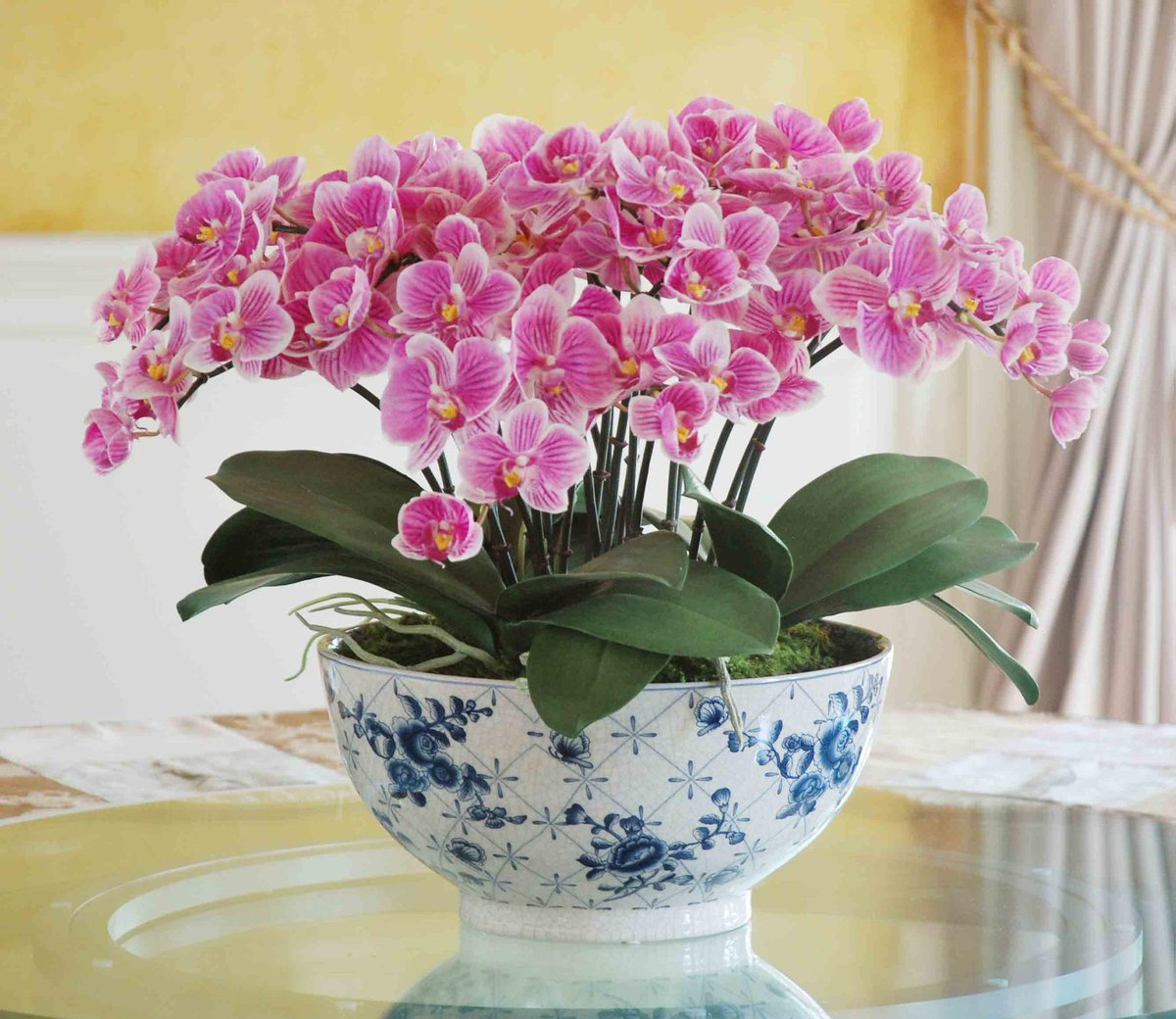 RESTOCK: Eclectic Phalaenopsis Orchid Centerpiece, as seen in @VERANDAmag. http://t.co/Ik572nJJVe