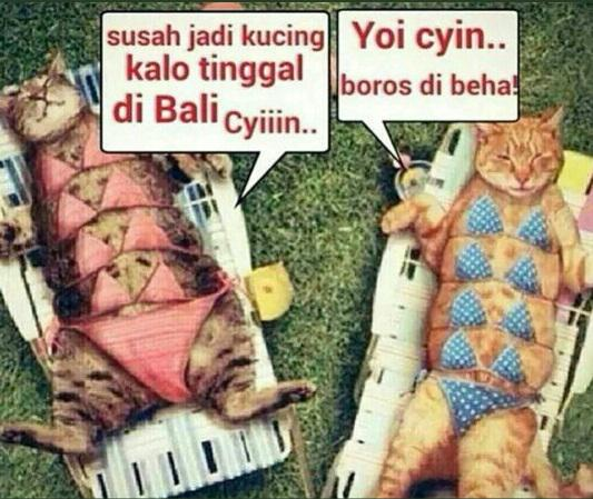 Download 93+  Gambar Meme Kucing Lucu Terbaru Imut Gratis