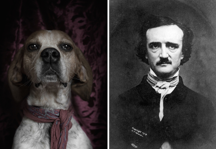 Adorable shelter dogs resembling famous authors. Photos: http://t.co/sEFievVT3N http://t.co/CDVVXdSrnP