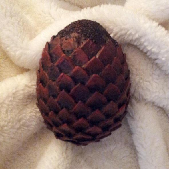 how to get a dragon egg in real life