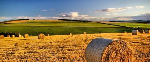 Agricoltura: Aumenta l'insicurezza alimentare nel mondo