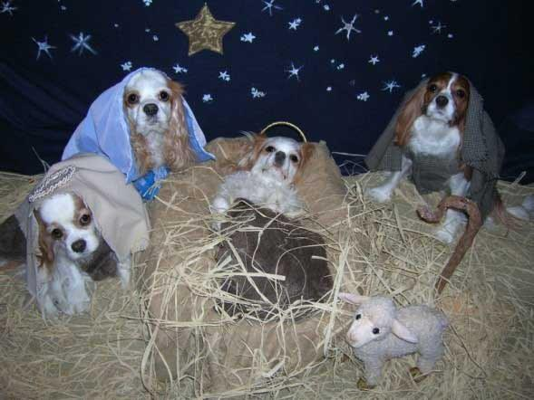 16 Cats And Dogs That Want No Part Of Your Nativity Scene