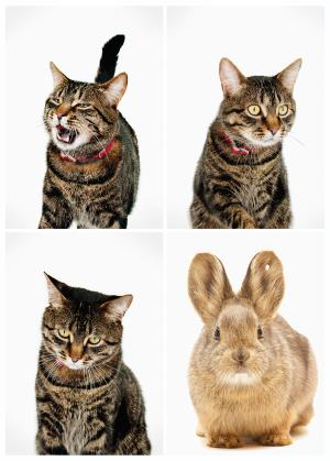 Which one is the bunny? Google new CAPTCHA bot-trap