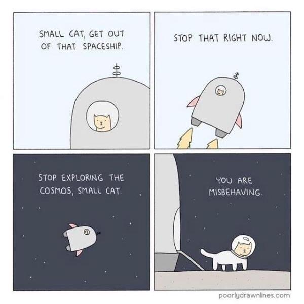 Stop exploring the cosmos, small cat. http://t.co/dQwWfuV1wd