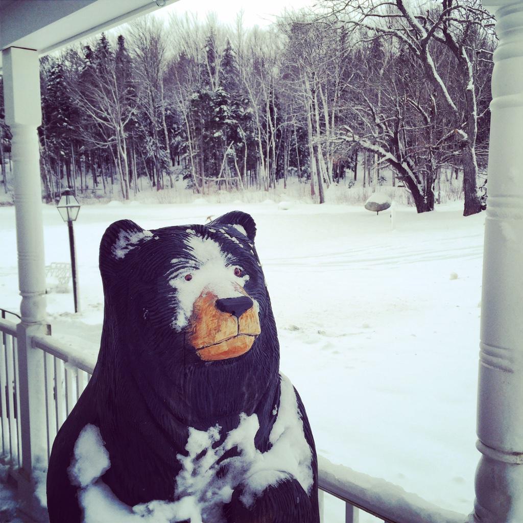 Bear at @HermitageClub #MediaTour http://t.co/ql6zoMHfoj