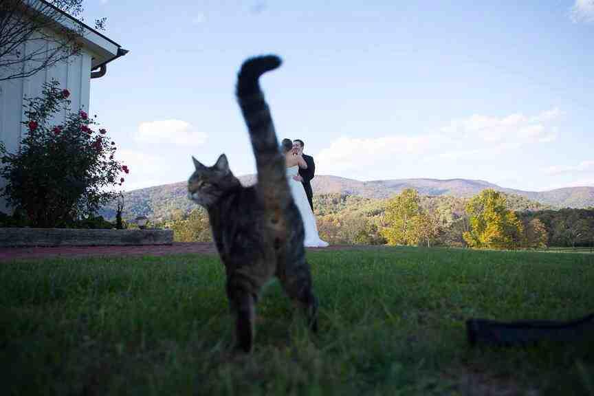 The definitive cat photobomb. http://t.co/dD8GzoWGjS