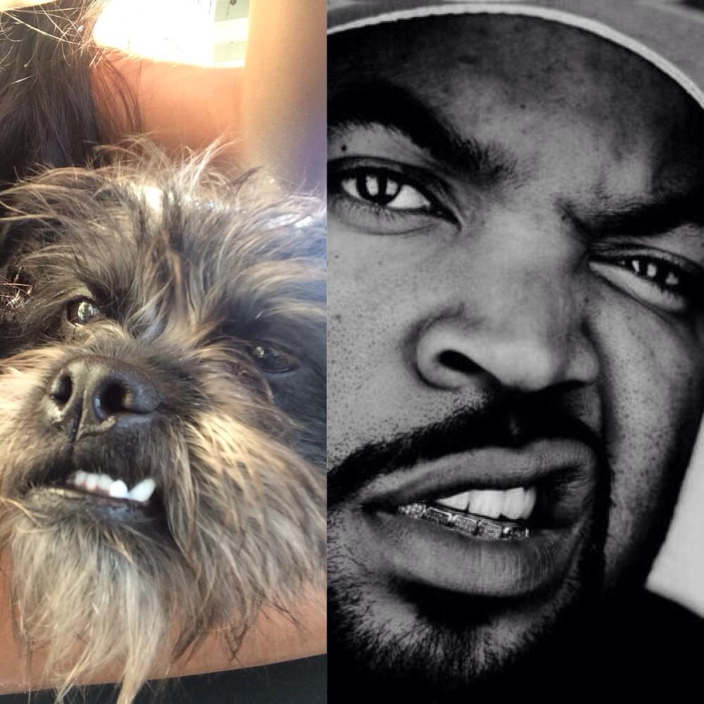 Dog That Looks Like Ice Cube