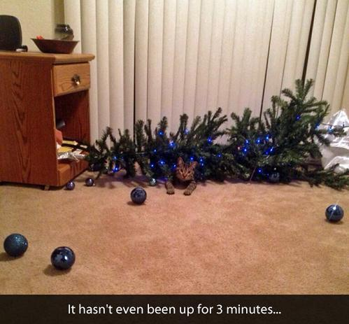 Out of all the many pics of cats destroying xmas trees,  I think this is my favorite :) http://t.co/fsZDKx0Hal