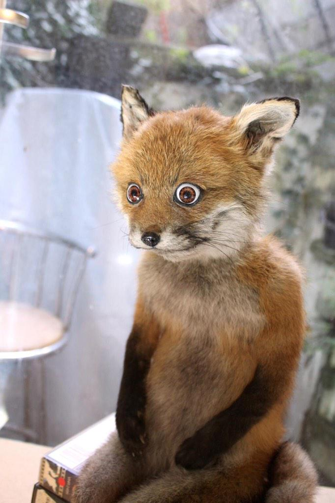 """""""@CrapTaxidermy: When you suddenly remember the things you did the night before when you were drunk... http://t.co/DMvMpjP3zT"""" @LittleSeac"""