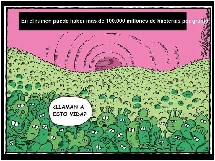 En el rumen de una vaca puede llegar a haber más de 100.000 millones de microorganismos por gramo! #microMOOC http://t.co/mOyb3d0JN2